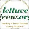 lettuce-grow